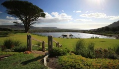 Cape Point Vineyard