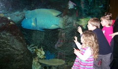 Roadschooling-Aquarium-visits.jpg