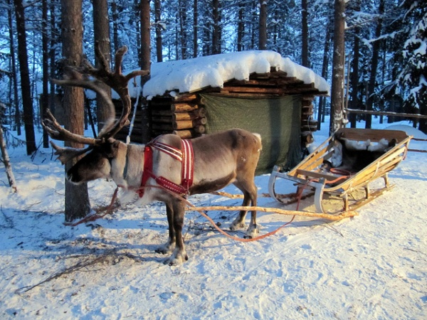 Planning a Trip to Lapland With Kids
