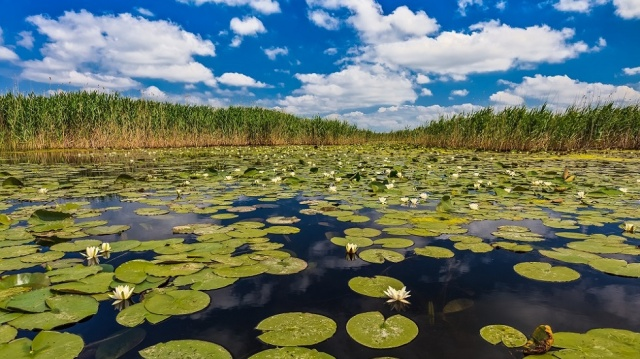 Explore the Danube Delta
