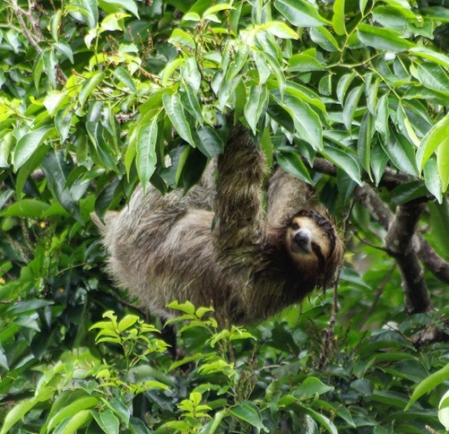 Exploring the Costa Rica wildlife