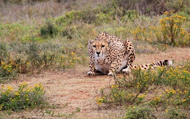 Watch The Big Cats In Action