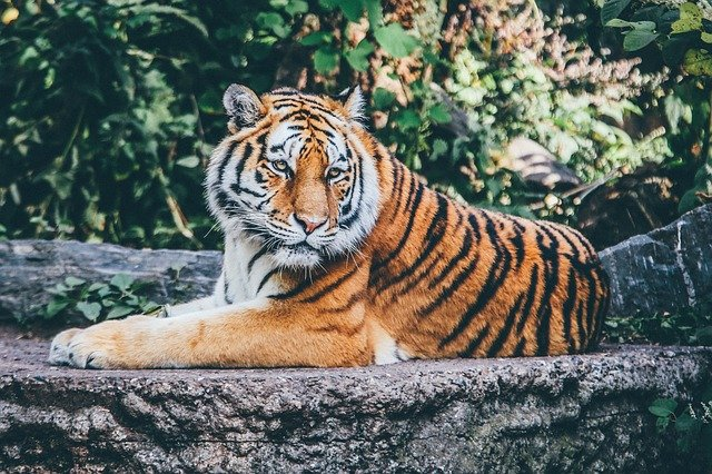 Top 10 Destinations Around The World To Watch The Big Cats In Action